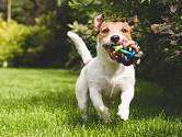 Výběr jména pro psího mazlíčka je záležitost, která si často nezadá s výběrem jména pro potomka