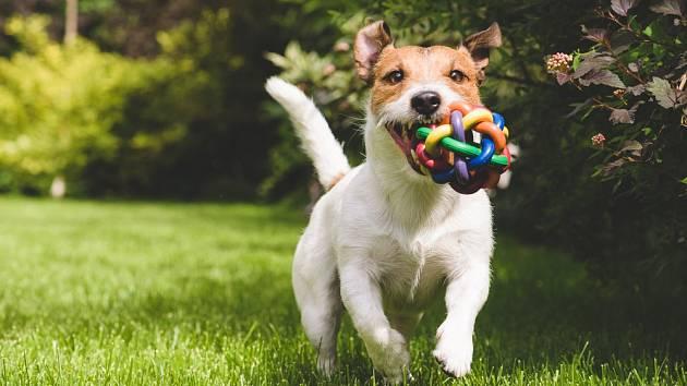 Výběr vhodného psího mazlíčka je záležitost, která si často vyžádá hodně času