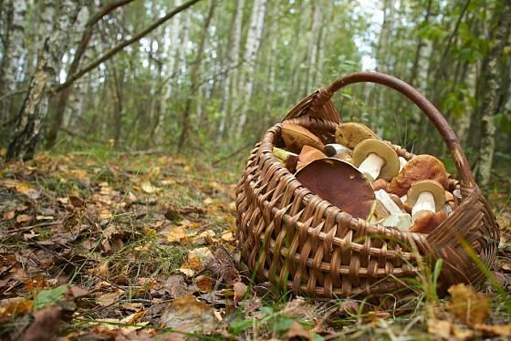 Kromě hub najdete v lese také klid