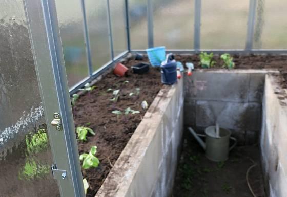 Při výsadbě plodiny střídáme tak, aby si nekonkurovaly.