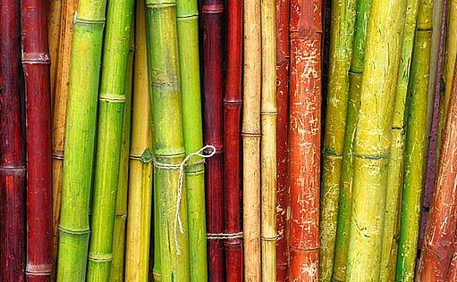 bambus na zahradě