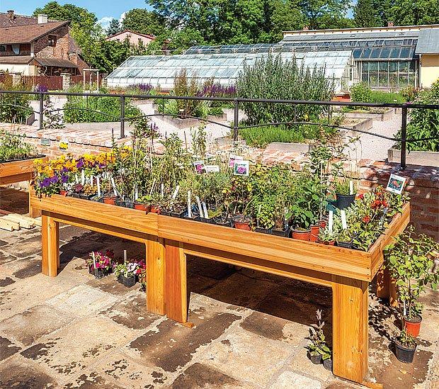 Jako památku na návštěvu zahrady si můžeme odnést bylinky