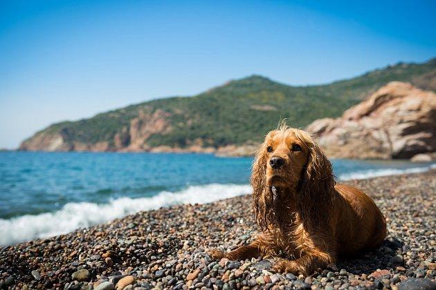 Psi si pamatují velmi dobře svá oblíbená místa