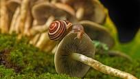 páskovka keřová pojídá houbu