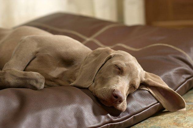 Nerušený spánek je důležitý pro každého psa.