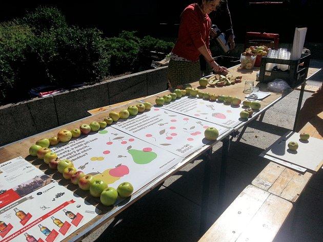 Iniciativa Na ovoce pořádá ovocné procházky a slavnosti pro veřejnost