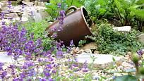 Aromatické bylinky, jako je vyšší šalvěj a plazivý popenec, se do štěrku hodí