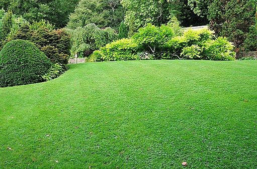 trávník jako zelený koberec