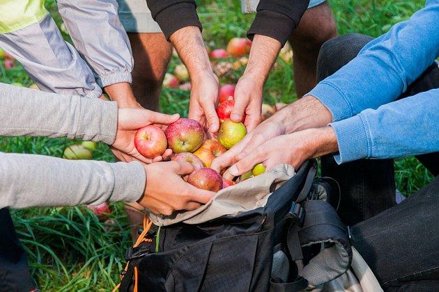 Nechat ovoce shnít je škoda
