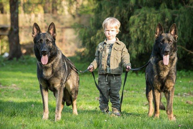 Němečtí ovčáci jsou jedni ze psů, kteří způsobí člověku nejčastěji zranění.