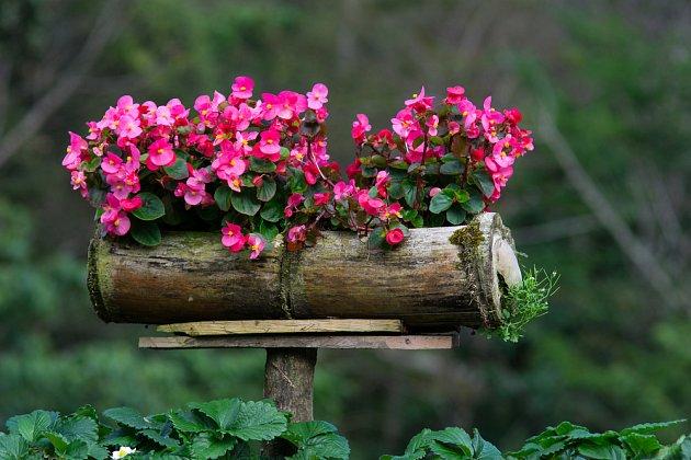 Begónie v bambusovém truhlíčku zdobí záhon