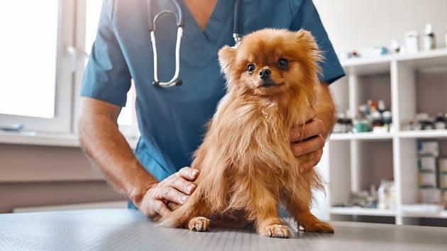 Některá plemena psů trpí zdravotními problémy častěji.