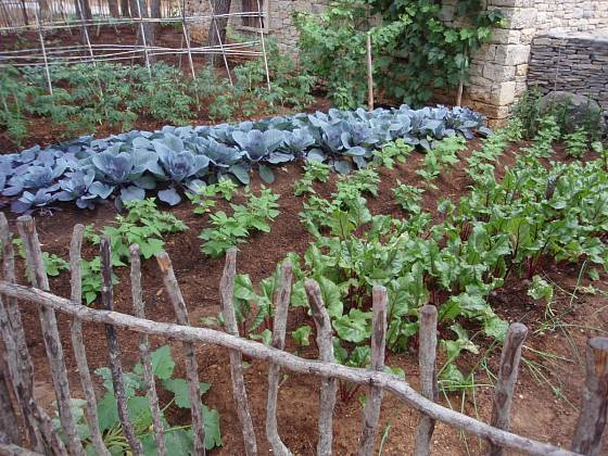 Důkladně opečovávaná dalmátská zahrada