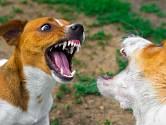 Vždy je třeba na věc pohlížet tak, že problémové je chování, nikoli pes.
