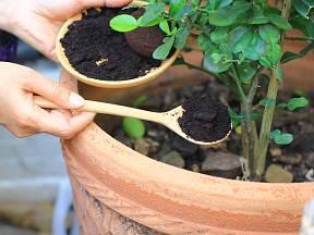 Kávovou sedlinu můžeme přidat k některým rostlinám.