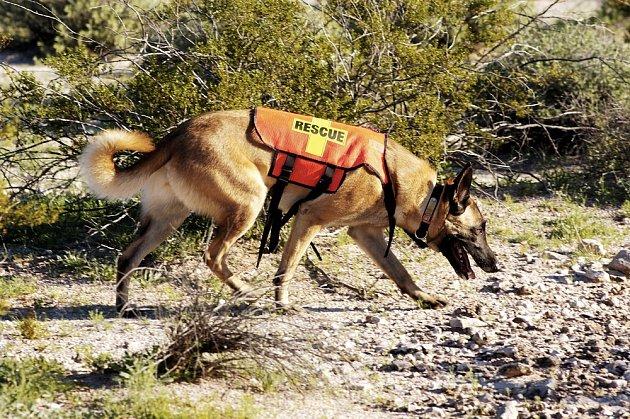 Psi sledují převážně změny, které na zemi zanechávají skutečné stopy (šlápota, rozmačkaná vegetace, pach boty, pach člověka, apod.).