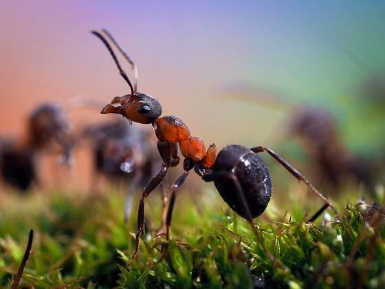 Mravenci, nenápadní pomocníci zahrádkáře