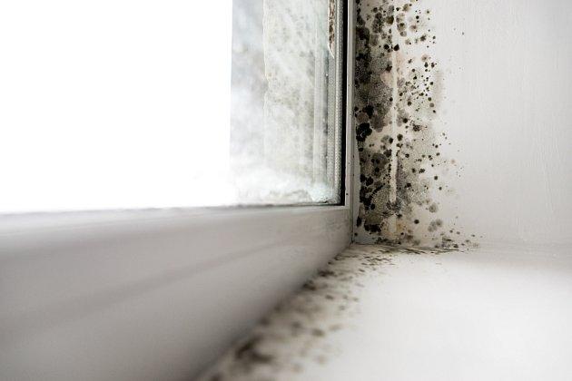 Plíseň se často objeví v rohu u okna.