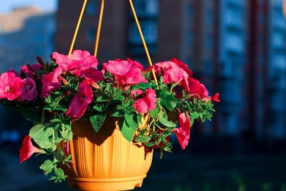 I plastové květináče seženete v závěsné variantě.