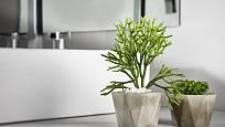 Květiny volíme do koupelny nejen podle její velikosti, ale také množství světla.