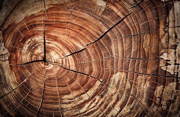 Svůj význam má mrtvé dřevo i jako biotop