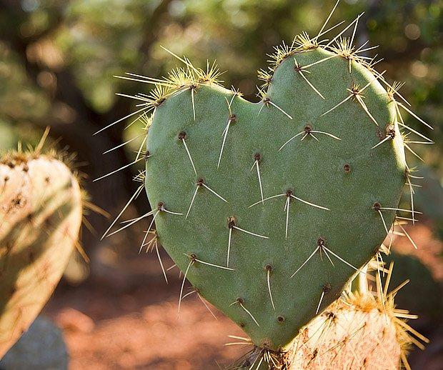 srdce kam se podíváš