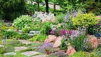 Využití hvozdíků na zahradě