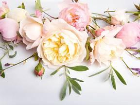 Růže jsou královnami již po staletí