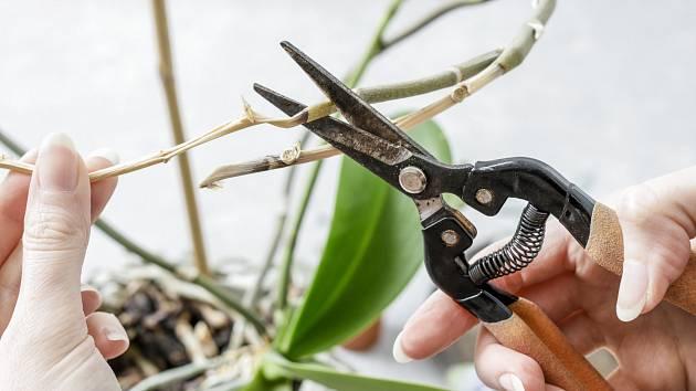 Odstraňte suché prázdné kořeny