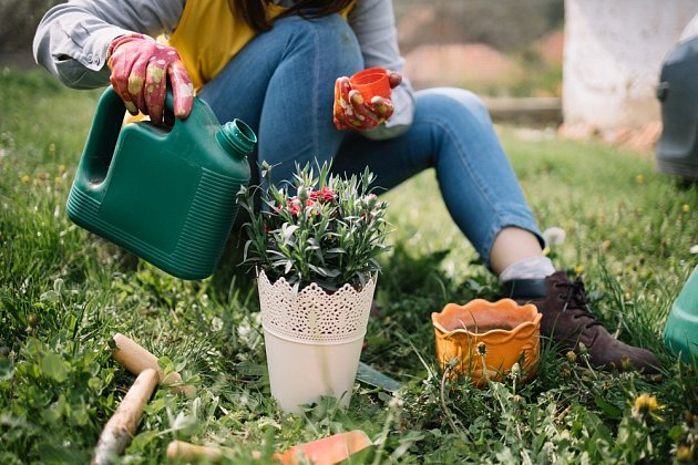 hnojení leto