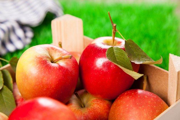 Letní řez jabloní vám přinese nejen bohatou úrodu, ale i kvalitnější plody.