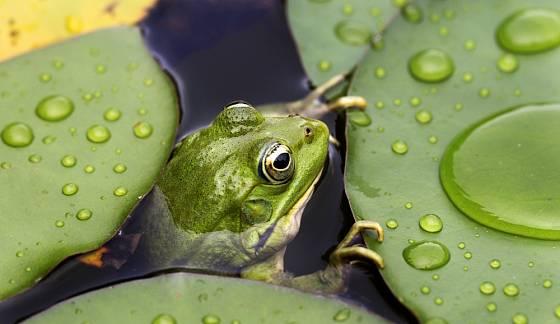 Ve vodních biotopech naleznou svůj domov mnohé živočišné druhy.