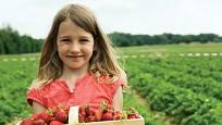 Se sbíráním jahod rády pomohou děti.