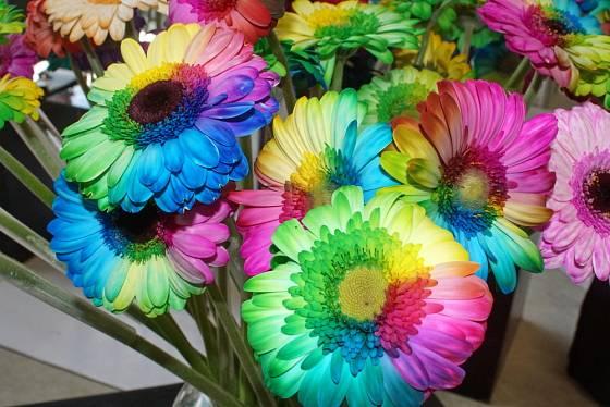 Obarvit se dají různé květy