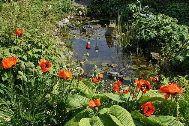 V dešťových zahradách hrají prim vodní a mokřadní rostliny.