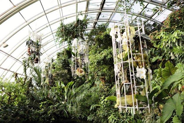 Z aktuální výstavy orchidejí ve skleníku Fata Morgana.