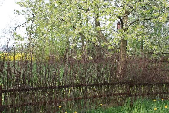 Ovocné stromy a ptačí budky na zhradu patří