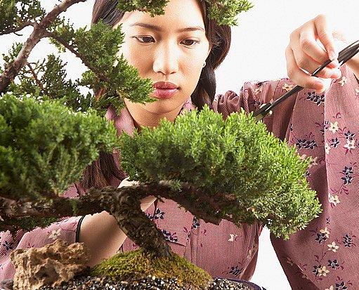 Tvorba bonsají: dávné, ale stále živé čínské a japonské umění