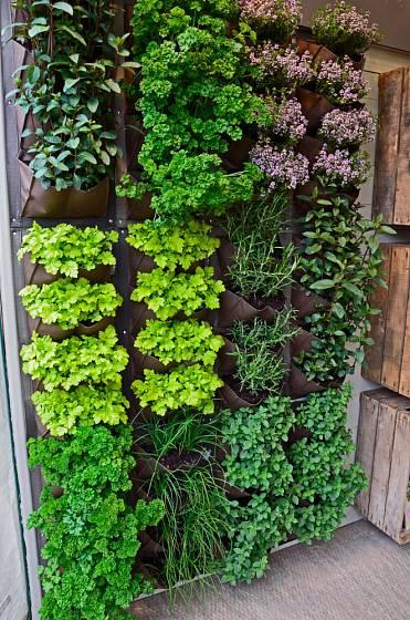 Plná stěna bylinek dík ypěstebnímu kapsáři