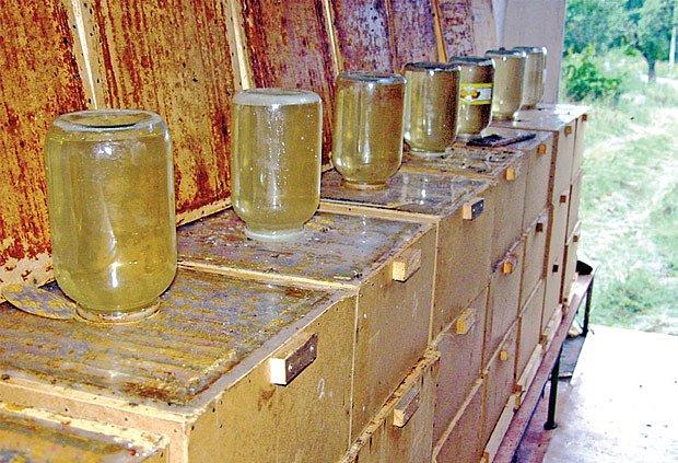 Velkou tradici mají čtyřlitrové prosakovací sklenice od okurek