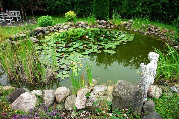 Vodní rostliny jsou krásné a čistí vodu