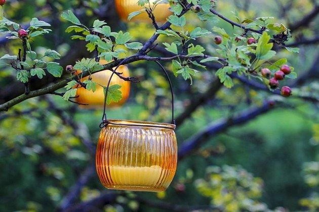 Hloh je krásný, léčivý a páky milovaný zahradní keř. Můžete ho ozdobit závěsnými svícny