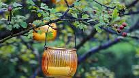 Hloh je krásný, léčivý a ptáky milovaný zahradní keř. Můžete ho ozdobit závěsnými svícny