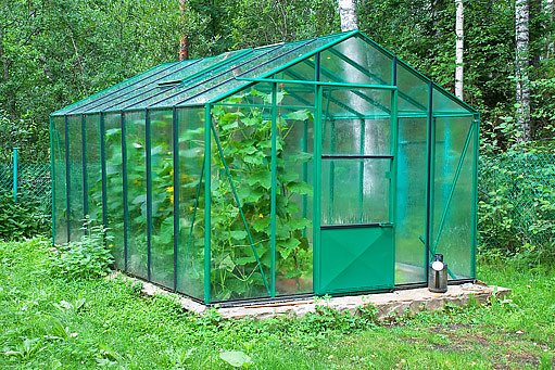 veselý zelený skleník
