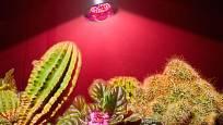 Umělé bodové osvětlení pro pokojové rostliny