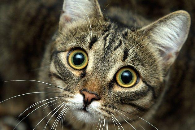 Kočky výborně vidí i za šera či ve tmě.