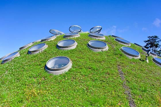 Na zatravněnou střechu stačí vsrtva 10 až 15 centimetrů substrátu.