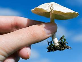 Sběr jarních hub obohatí nejen vaše tělo, ale i kuchyni