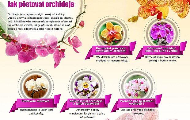 rozcestník - Jak pěstovat orchideje