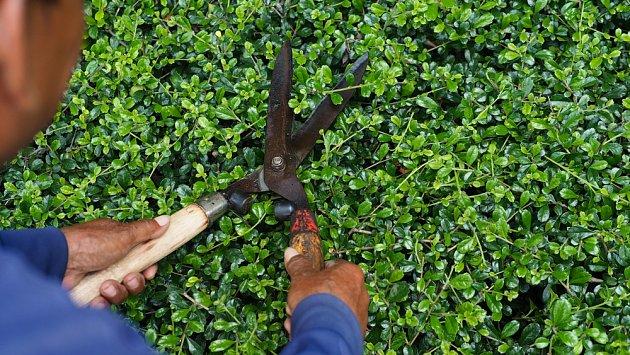 Ruční nůžky na živý plot by vám měly padnout.